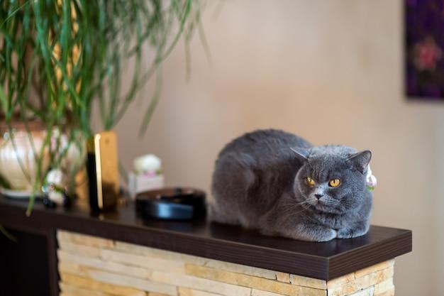 Серая короткошерстная кошка, сидящая на деревянной платформе