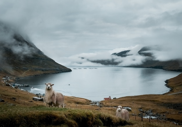 Shot of the beautiful nature such as the cliffs, sea, mountains of the faroe islands