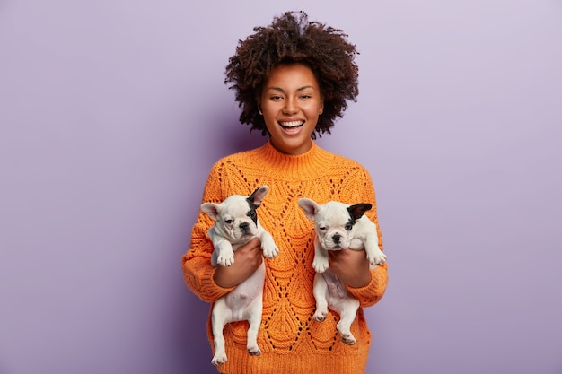 Colpo di allegra femmina dalla pelle scura con i capelli ricci, tiene due cuccioli carini di razza appena nati, trova un nuovo ospite per animali domestici, è di buon umore, indossa un maglione arancione, isolato su un muro viola
