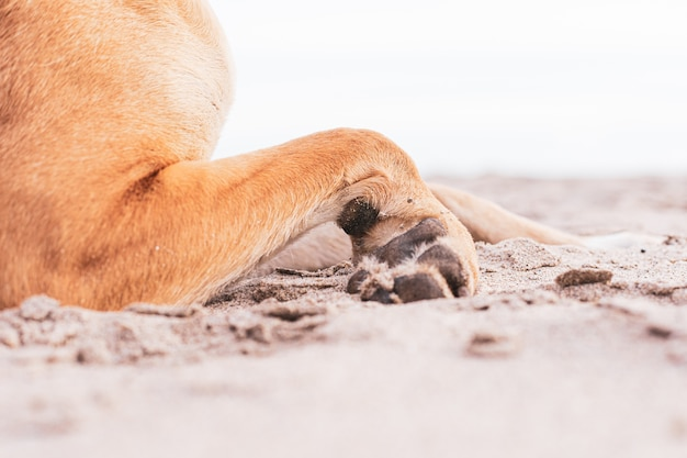 Shot of the cute paws of a brown domestic dog on the sand-covered ground