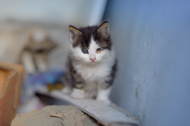 Shot of a kitten with two distinctive and dissimilar in size eyes, sitting on a wooden plank
