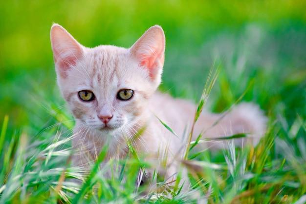Снимок красивой кошки с яркими глазами, сидящей на траве