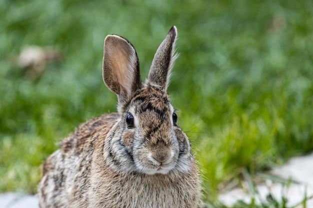 Снимок симпатичного коричневого кролика, сидящего на заросшем травой поле