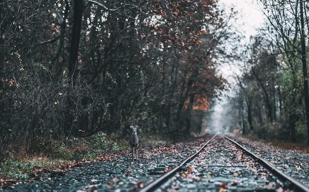 숲 사이에서 기차 트랙 근처에 서있는 사슴의 샷