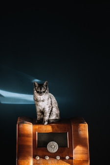 ヴィンテージの木製ラジオに座っている黄色い目を持つふわふわの灰色の美しい猫のショット