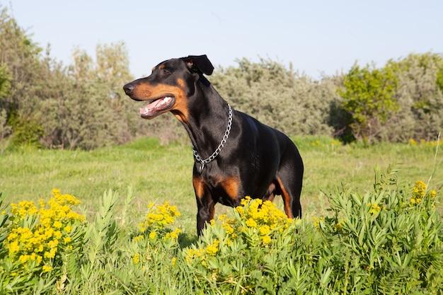 잔디에서 노는 사랑스러운 강아지의 샷
