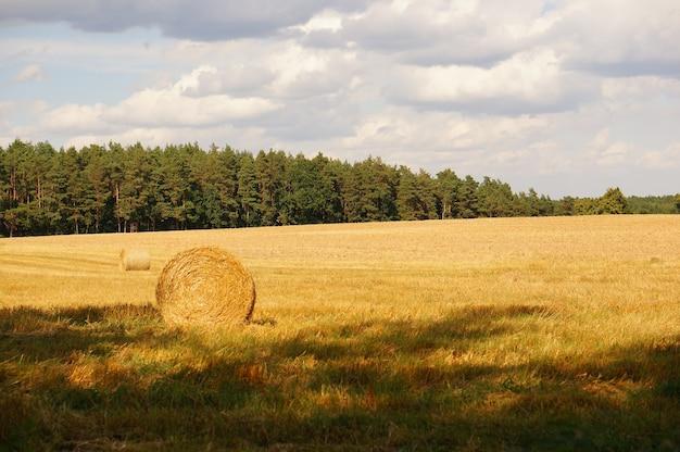 畑の干し草の俵のショット