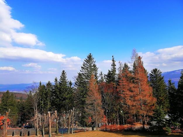 ポーランド、カルパチの森の赤と緑の木のショット