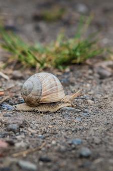 岩だらけの地面に大きな殻を持つカタツムリのショット