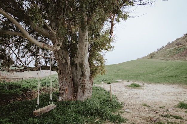 Shot of an old tree and an empty swing hanged on it in nature