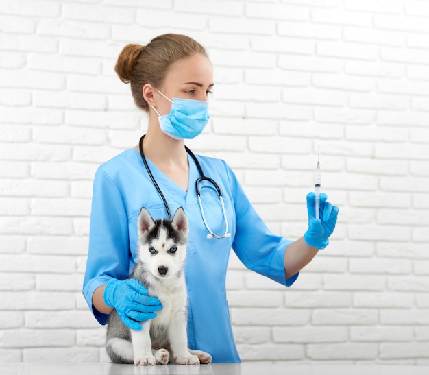 Shot of a professional vet holding a syringe preparing to make in injection to a little siberian husky puppy profession healthcare medicine pets animals vaccination concept.