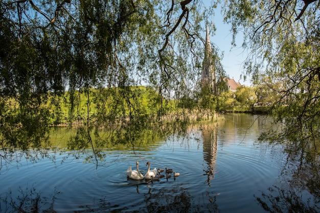 Inquadratura di cigni che nuotano nello stagno accanto a una cappella