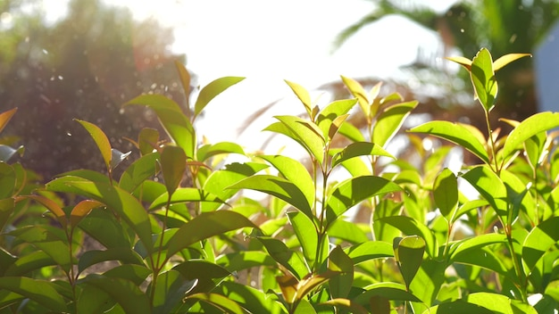 Shot of watering garden with young trees in bright sun light in foreground