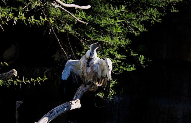 Inquadratura di un avvoltoio bianco seduto su una panchina di un albero