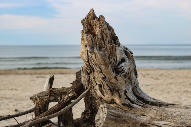 Shot of withered tree on the beach with sea view