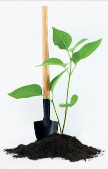 Лопата с небольшим растением и землей на белом
