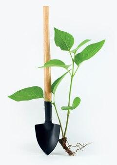 Лопата с маленьким растением на белом