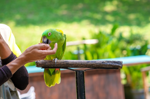 A show with birds in a bird park. a trainer with parrots.