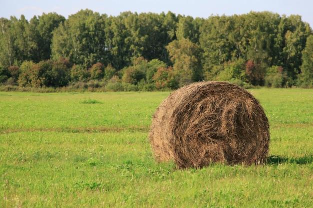 干し草のshowingを示す圃場の眺め