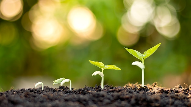 豊かな自然環境の中で地面に生えている木の段階を示しています。自然の植物の成長と木の世話についてのアイデア。