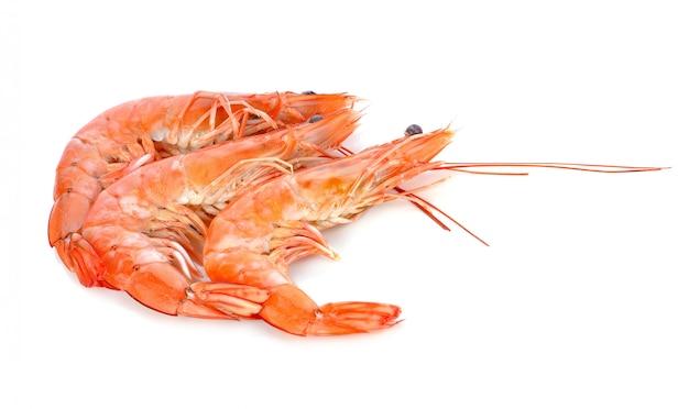Shrimps on a white