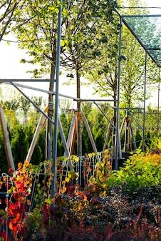 조경 원예를 위해 정원 센터의 관목 및 식물과 야외 욕조에 심었습니다.