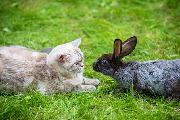 Сиамская кошка и коричневый кролик сидят вместе на зеленой траве в летнем саду. концепция пасхи
