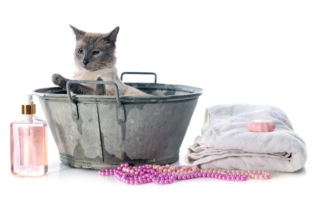 Сиамский кот в пруду
