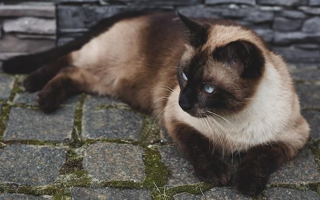 庭にシャム猫が横たわっている