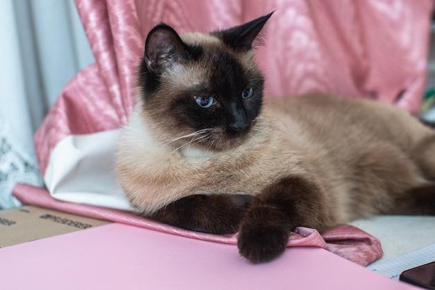 テーブルの上のシャム猫