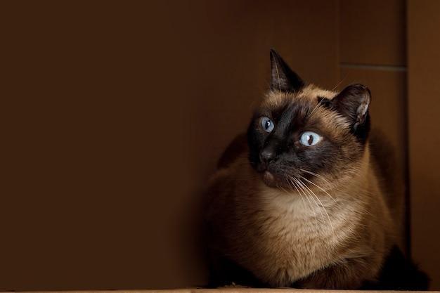 Сиамский кот отдыхает внутри картонной коробки домашние животные дома