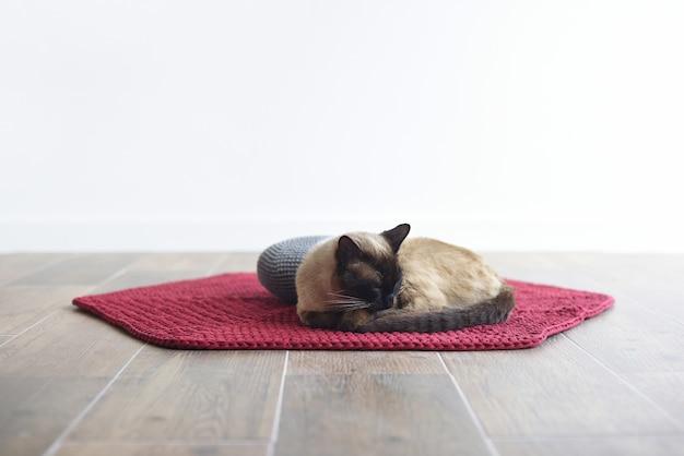Сиамская кошка спит на ковре на белом фоне