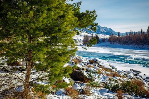 Сибирь зимой. заснеженная горная долина, голубое небо, хвойные деревья, живописная, мощная река катунь. великолепный зимний пейзаж, место для текста.