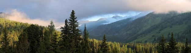 シベリアの山タイガ、トウヒの森、夕焼け空、パノラマ、アルタイ