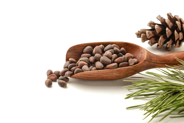 Siberian pine nuts and needles branch on white background.