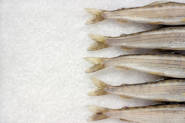 Siberian river fish grayling on white large crystals salt
