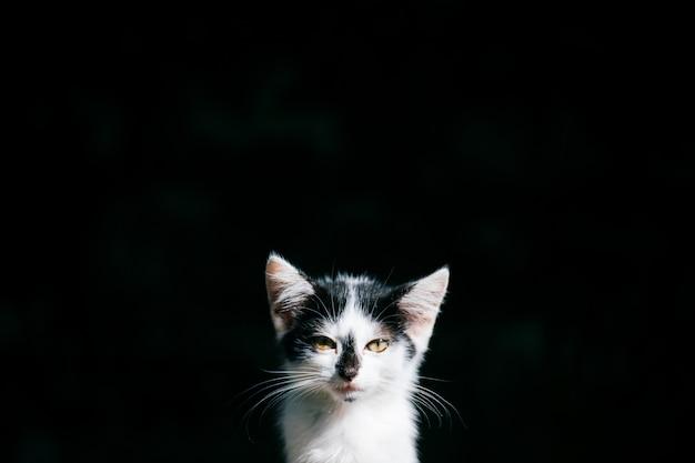 暗闇の中で病気とホームレスの貧しい子猫
