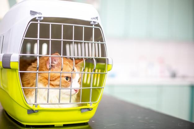 獣医クリニックの檻の中の病気の猫、獣医の概念