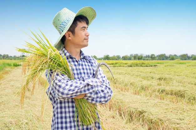 Side of asian young farmer happy harvest paddy rice in a green rice field and blue sky