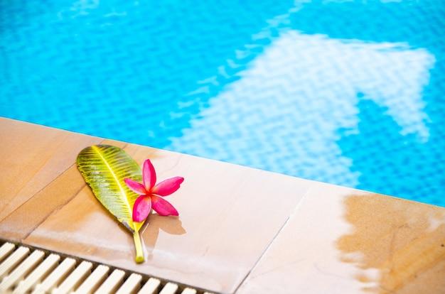 Сторона плавательного бассейна и цветок