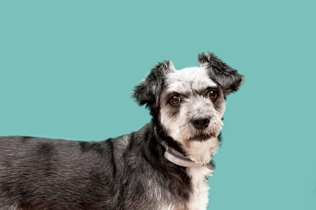 Vista laterale di adorabile cucciolo di razza mista