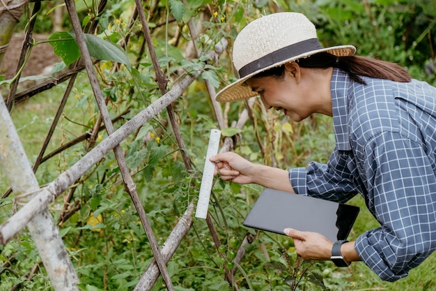 Side view asian woman studying different plants with a tablet
