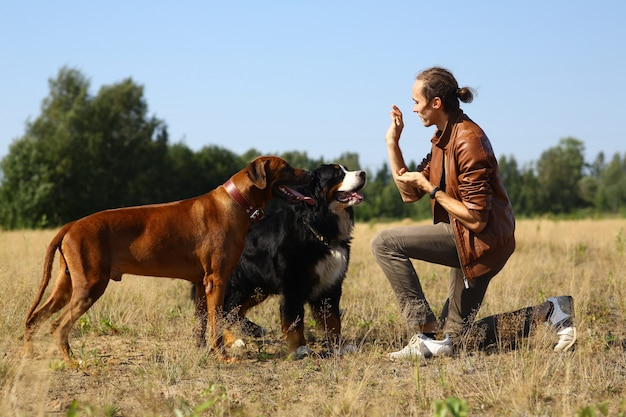 Вид сбоку на молодого стильного кавказца, угощающего двух собак бернских гор и риджбека на летнем поле