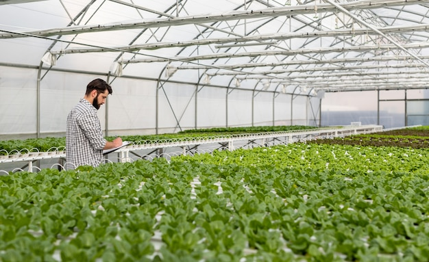 Side view of bearded man in checkered shirt writing on clipboard while checking hydroponic table with plants in hothouse