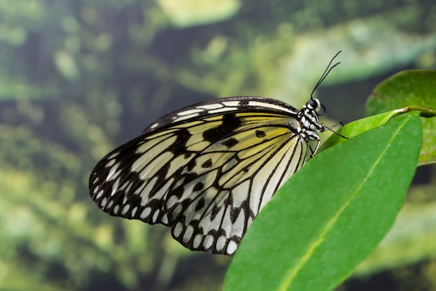 Side view butterfly in nature
