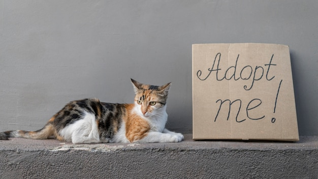 Side view of cute cat sitting next to adopt me sign