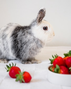Side view of a cute rabbit and strawberries