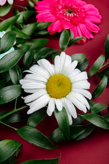 Side view of daisy and gerbera flowers with ruscus on red background