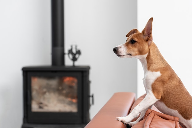 Side view of dog on couch with defocused fireplace