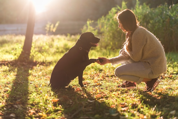 Side view of dog and woman hand shaking in park
